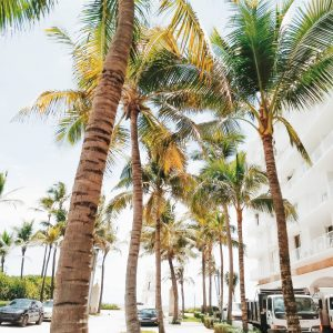 Palm Springs Florida offers roofing services